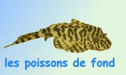 poissons tropicaux d eau douce les poissons de fond
